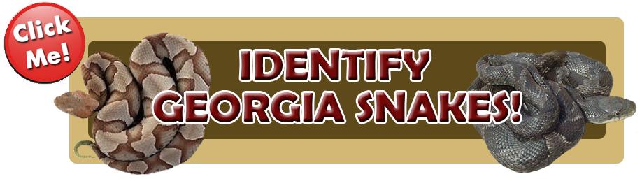 georgia Snakes