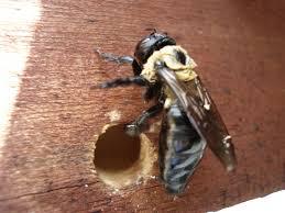 wood bee control johns Creek GA