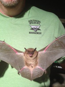 Johns Creek Bat Removal