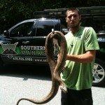 alpharetta snake