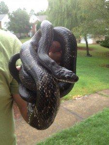 milton snake