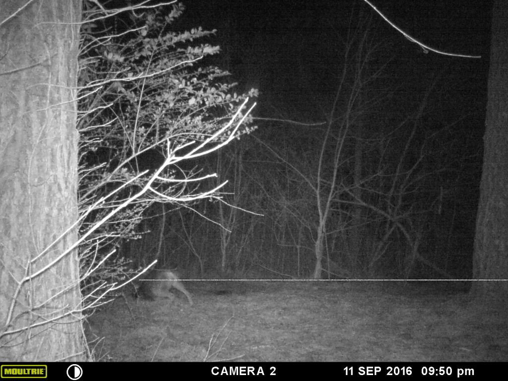 coyote trapping johns creek