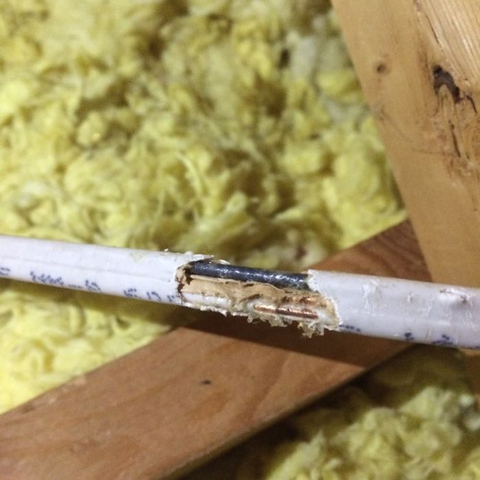 wires chewed in attic